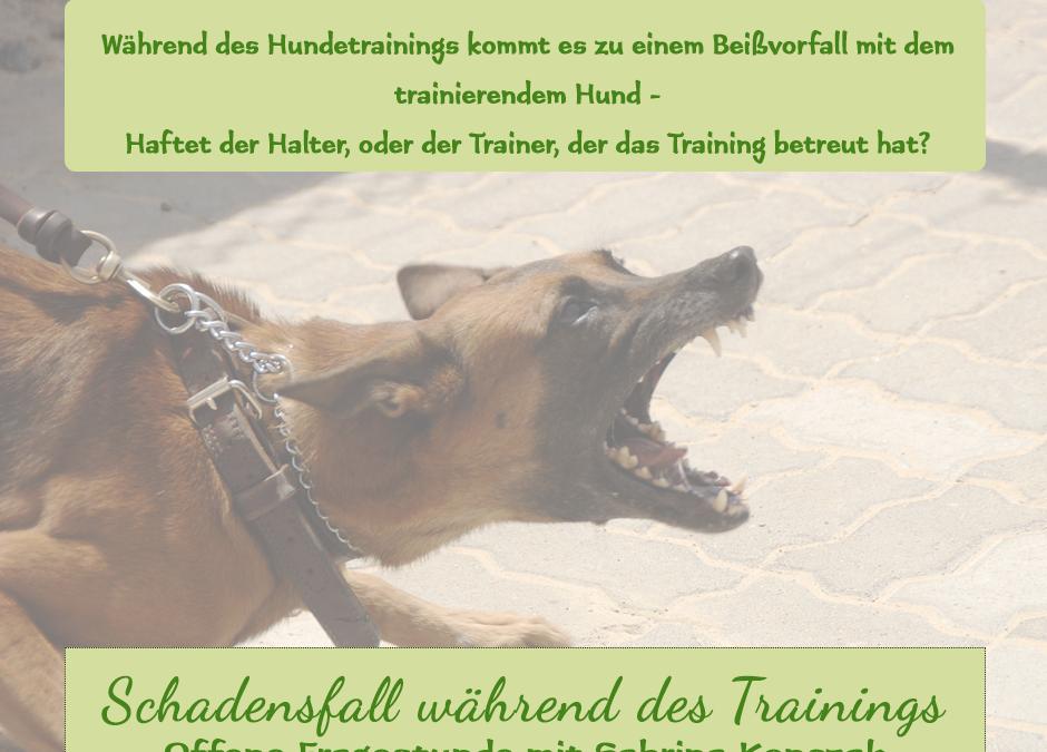 Schadensfall während des Hundetrainings
