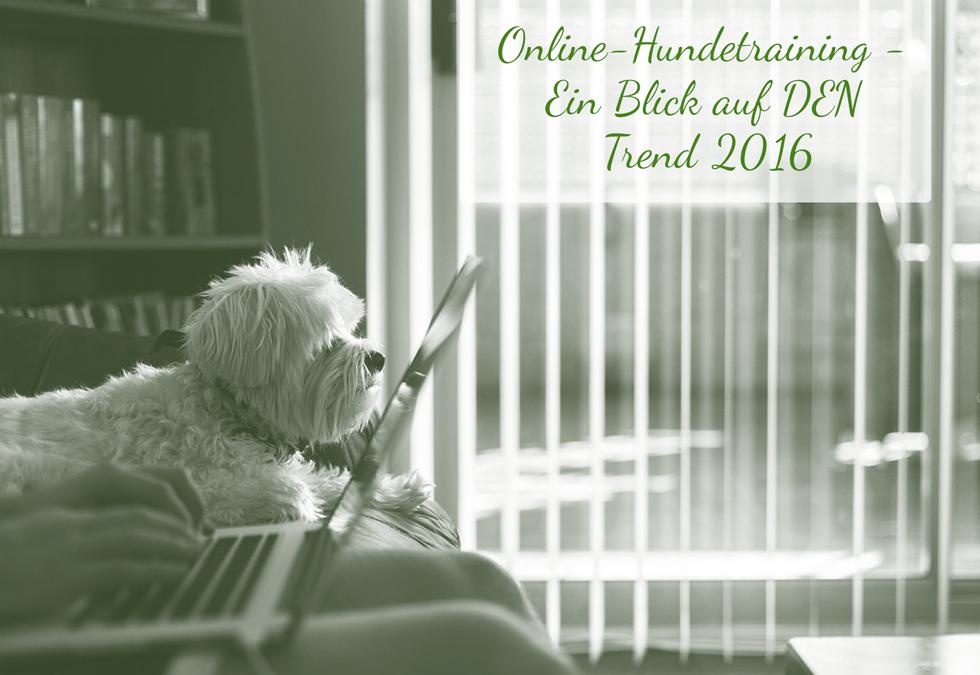Online-Hundetraining – Pros, Contras und die rechtliche Seite