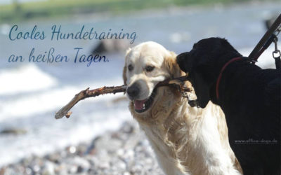 Cooles Hundetraining an heißen Tagen