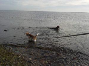 hundetraining bei hitze