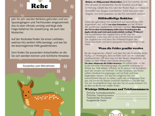 Wildtierkinder-Flyer Reh