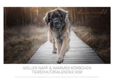 Spendenkalender 2021 für Tierschutzverein (Kooperationsarbeit)